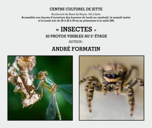 INSECTES FORMATIN 2